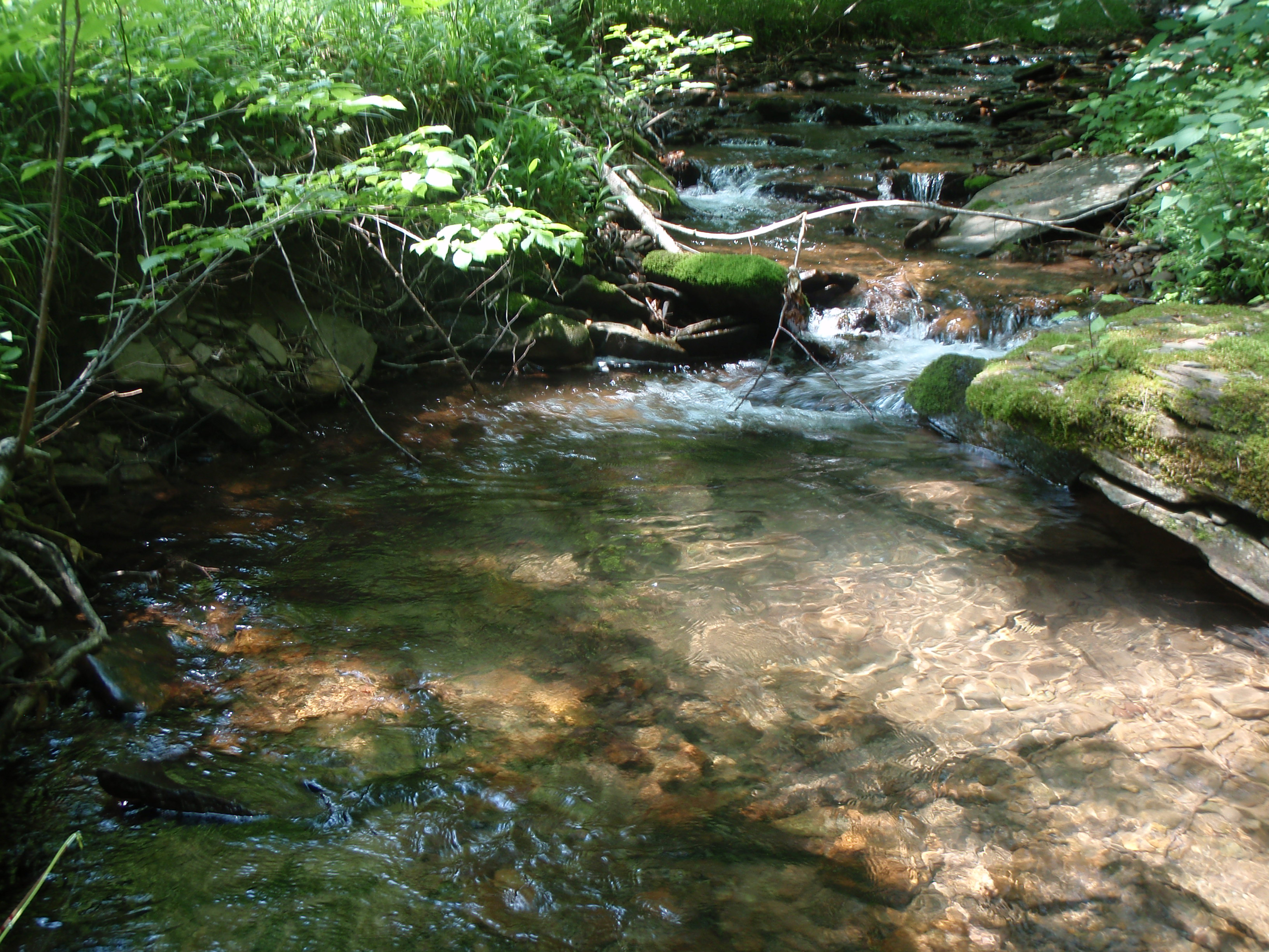 301 moved permanently for Best trout fishing in pa
