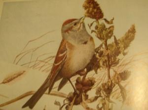 fuertes, tree sparrow