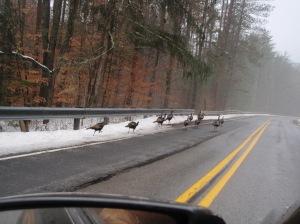 Potter County traffic jam