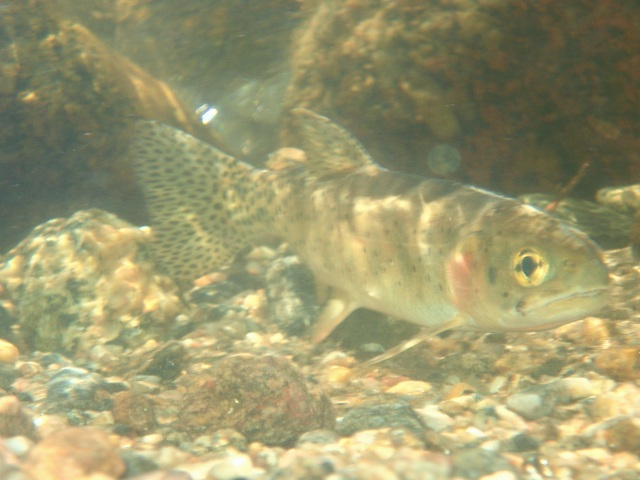 the fish eye glazed,