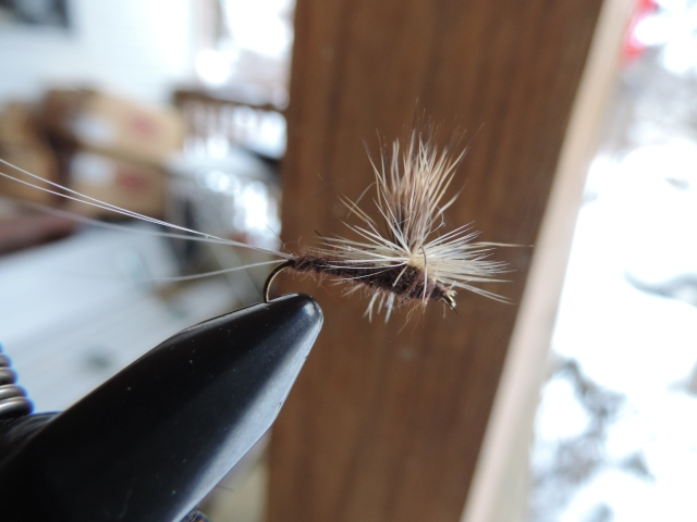 Isonychia spinner, by Bob Stanton