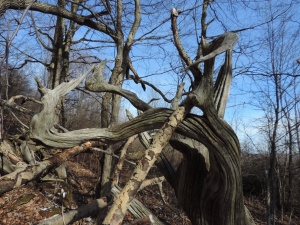 from a fenceline made of roots