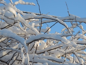 The mild winter gave us several days of blue-white splendor.