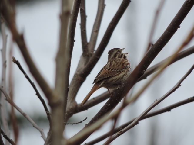"They don't call him song sparrow for nothin'. Covering Sun Ra's ""Springtime Again""?"