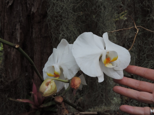 orchids at botanical gardens
