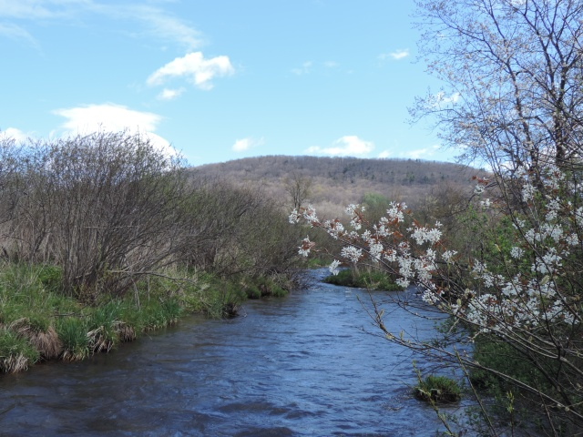 upper Allegheny with shadbush blossoms
