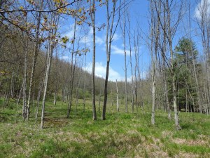 forest glade, Dryden Hill