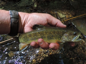 sometimes a tiny pool can yield a surprising trout