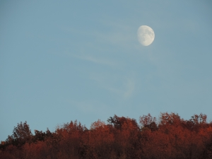 there's an artful dying of the year as autumn deepens and the moon lifts off the hill like a wayward spirit...