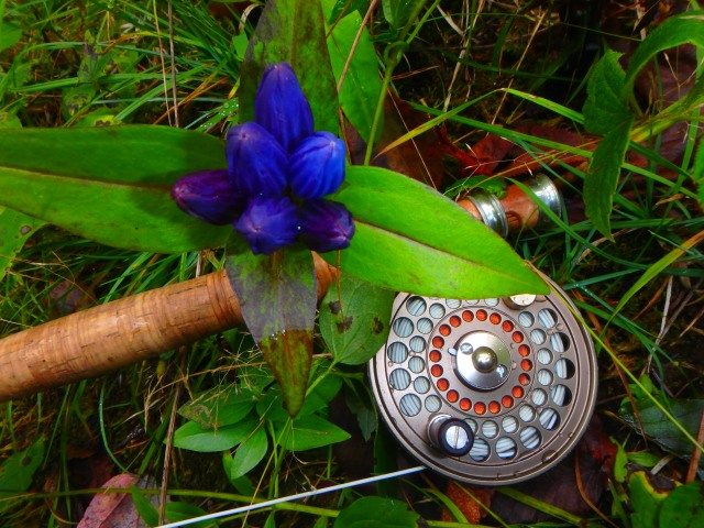 closed gentian/open season/peace...