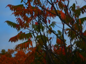 but i'll catch the sumac fire and maybe find a handful of pics to share...