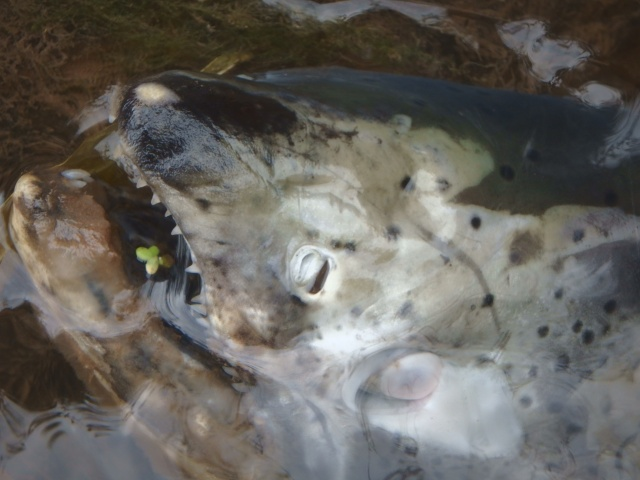 hap-py halloweenn... i hope the feesh are BII-TING!
