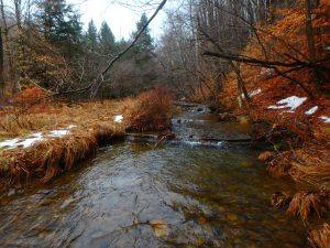 PA wild stream