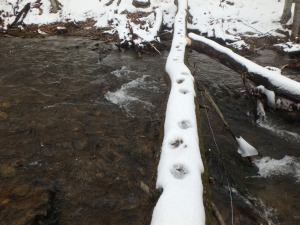 fisher tracks on log