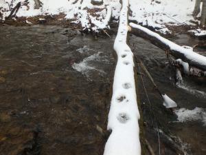 fisher tracks on log